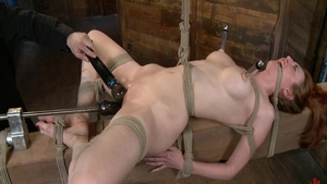 Hogtied in the company of babe